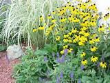 perennial garden ideas - Bing Images