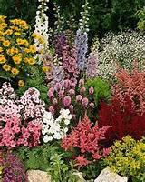 perennial flower garden ideas hfhwzbx