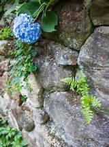 25,503 perennial flower garden Home Design Photos
