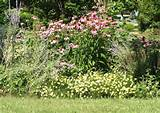 Amazing Colorful And Beautiful Perennial Flower Garden Designs Ideas ...