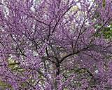 26,307 perennial flower garden Home Design Photos