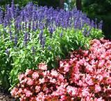 flower landscaping ideas