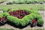 flower plants flowers and plants garden landscape design ideas jpg