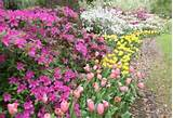 ... Flower Border Divine Garden Ideas Astounding Water Garden Plants Post