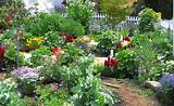 cottage garden courtesy of garden web