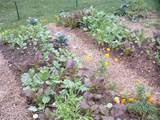 Raised Beds are Ideal for Small Space Gardens