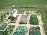 bed vegetable gardens ideas pictures and 500x375 garden planting ideas