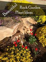 garden plant ideas beautiful rock garden plant ideas 1868x2538 garden