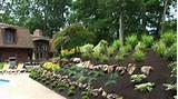 landscaping plants ideas