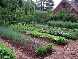 ... Vegetable Garden Designs Pictures : Backyard Landscaping Ideas
