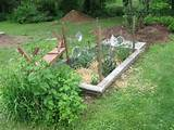 Vegetable Garden Pictures & Design Ideas