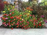 flower color scheme ideas for exterior garden landscape design ideas