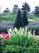 evergreens offer an interesting focal point in a beautiful flowerbed