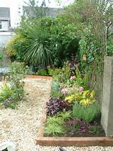 small garden pebble and pretty planting
