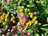 spring summer flower garden 150x150 spring summer flower garden