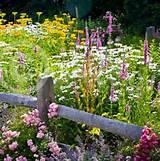 summer garden flowers jpg