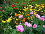 flower garden photo below the beauty of the flowers speaks for itself