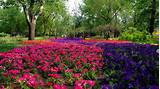decoration flower summer garden landscape design flower garden
