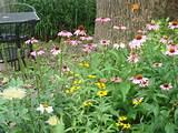 Garden of Summer Flowers