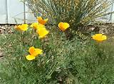 summer garden flowers.jpg