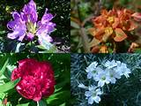 can you recognise these summer flowers from the eco muslim garden