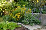 in a corner of the vegetable garden mexican mint marigold tagetes