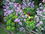 perennial flowers in a cottage garden border