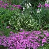 perennial flowers and plants in your garden