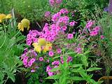 Perennial Flowers for A Charming Garden : Beautiful Perennial Flowers ...
