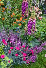 early summer garden of nepeta catmint tall vertical perennial plants