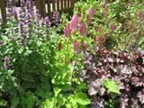 frugal gardening tip 4 plant perennials
