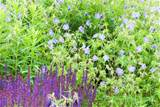 Perennial Plants Articles