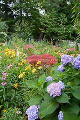 Lush flowering backyard with fence, lawn grass, daylilies, hydrangea ...