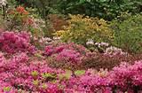 garden plants flowering