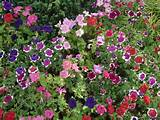 beautiful flowers garden new