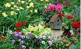 wild flower gardens are fitted to host flowers already adapted to the