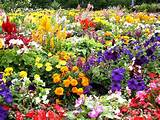 ... flower garden around it. This picture depicts that vision perfectly
