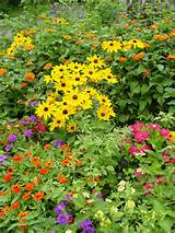 rudbeckia varieties for the flower garden