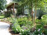 my cottage garden today