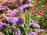 butterfly garden flowers and plants