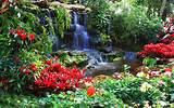 nature landscapes garden plants flowers pool trees