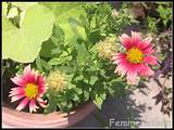 summer flowers and plants home garden glimpses 11