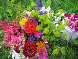 Pumpkin Ridge garden Charlotte juillet2009 292
