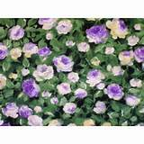 ENCHANTED GARDEN by SENTIMENTAL STUDIO for MODA green/lilac