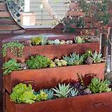 Dresser planter...love all the succulents