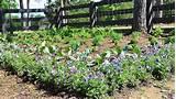 first texas garden