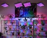 led grow lights and your indoor garden