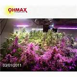 appliable for hydroponics medical plants greenhouse indoor plants