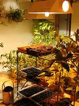 functional indoor grow lights indoor grow lights decorative garden