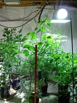 what kinds of lights are needed to grow vegetable plants indoors